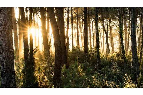 """Sunset Forêt """"Pano"""""""