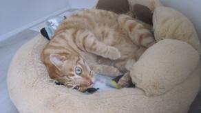 Do cats purr when humans aren't around?