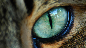 Do Cats Blink?