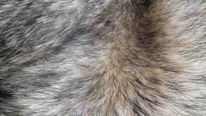Reasons for Cats developing Oily Fur