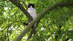 Why Do Cats Get Stuck in Trees?