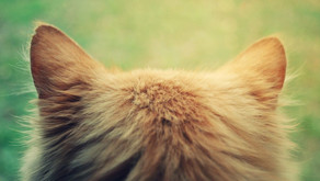 10 Interesting Things About Cat Ears