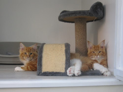 Archie and Jasper