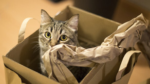 Stress Free Moving House For Your Cat