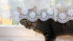 Helping Cats Overcome Phobias