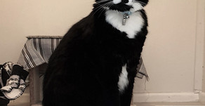 7 Black and White Cat Breeds