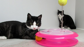 Important Things You Should Know Before Bringing a Cat Home