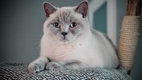 5 Fun Reasons for Cat Kneading