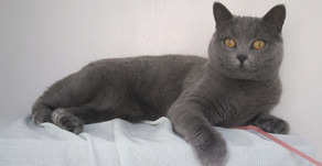 10 Amazing Grey Cat Names