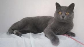 10 Amazing Grey Cat Names
