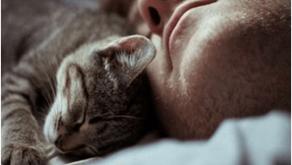 'Why Does My Cat Sleep On My Head?