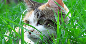 All About Outdoor Cats