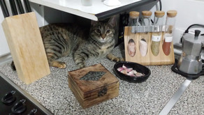 How to Get Your Cat to Stay Off the Kitchen Worktop