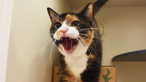 Dealing With an Aggressive Cat?