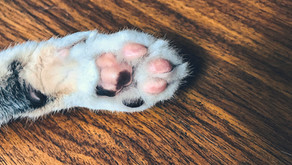Should You Clean Your Cat's Paws?