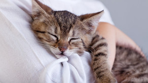 """8 Surprising Ways to Say """"I Love You"""" in Cat Language"""