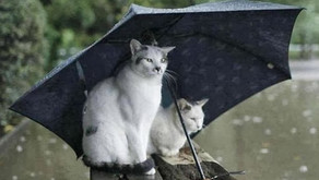 Cat Cold Weather Mistakes to Avoid