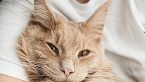 Are Cats Good for Kids?