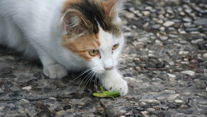 Is It Safe for Your Cat to Eat Bugs?