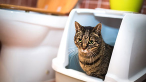 Best (and Worst) Spots for Your Cat's Litter Box