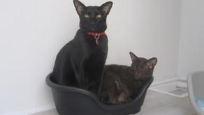 7 of the Friendliest Cat Breeds