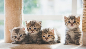 6 Kitten Health Issues to Watch For