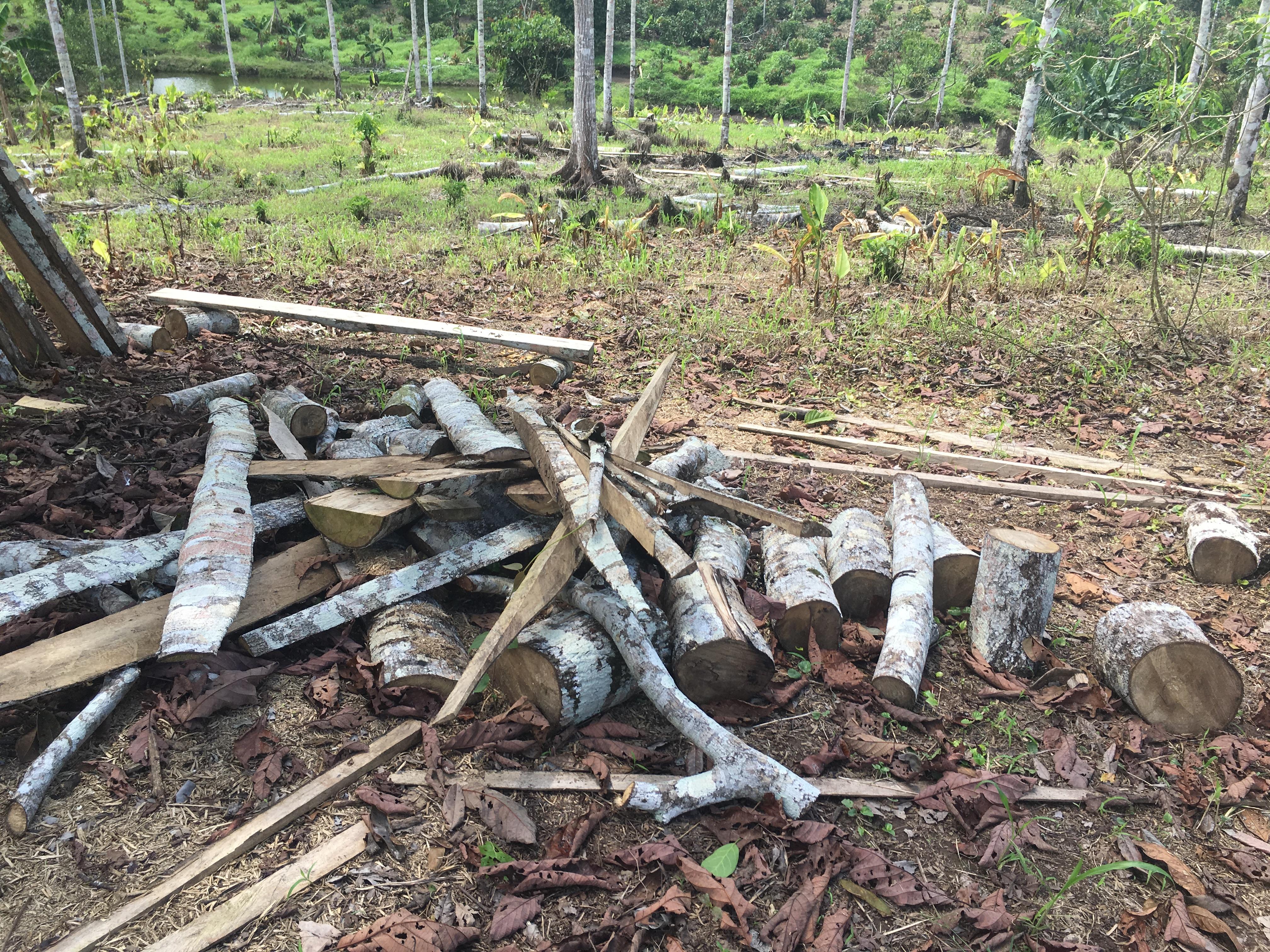 Uso dómestico de madera