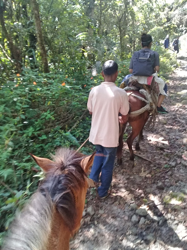 horse ride lake holon