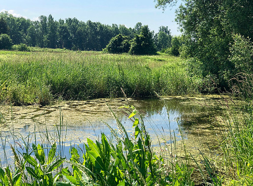 Ecologically Restorative Organic Farming