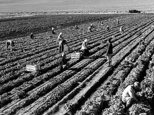 It's Time to Re-Imagine Agriculture: Farmers Support for NY Farm Labor Bill