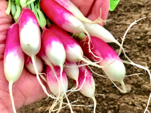 Why are root vegetables so good for us?