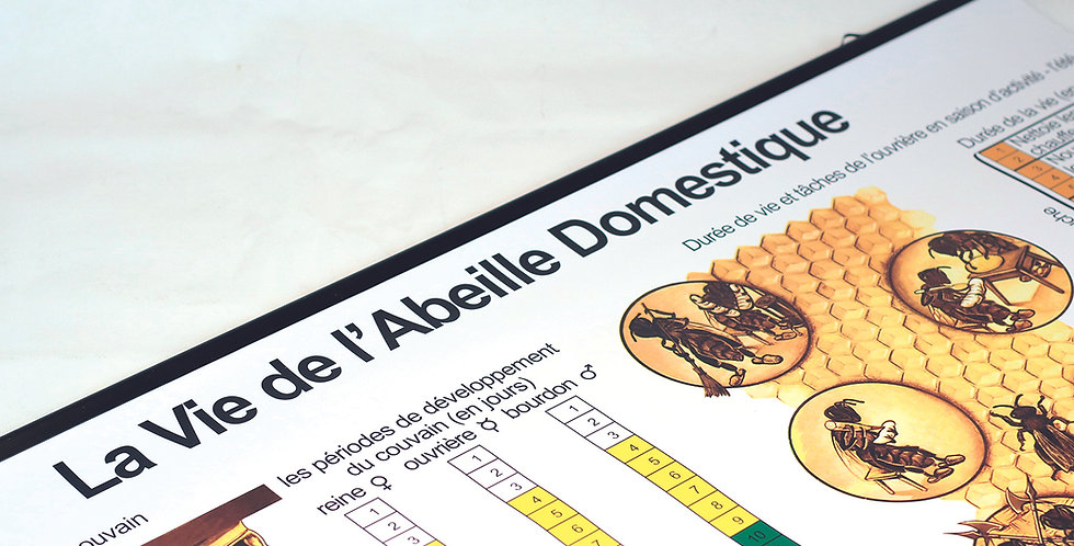 500.100 La vie de l'abeille – Tableau didactiqu