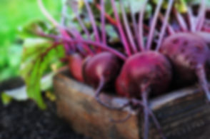 Fresh harvested beetroots in wooden crat