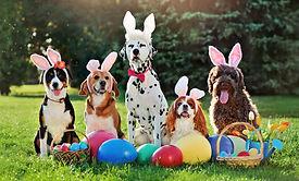 A group of dogs with bunny ears headband