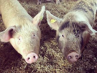 grisarna.jpeg