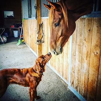 häst_och_hund.jpeg