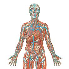 Anatomy_thumbnail.png