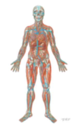 Anatomy_multipleSystems_500.png