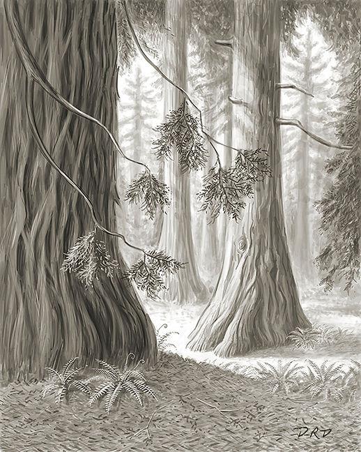 redwood_forest_550px.jpg