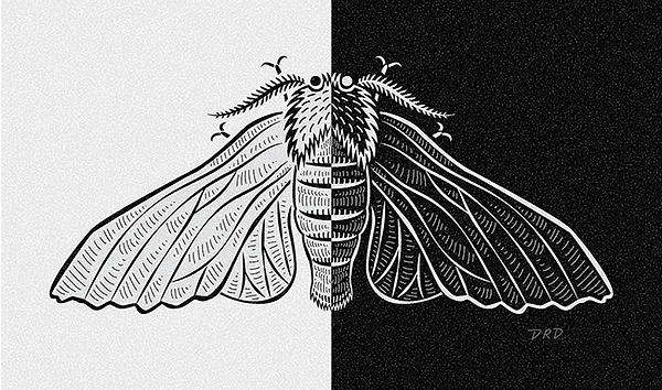 peppered moth_650px.png