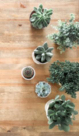 background-cactus-decor-1470168.jpg