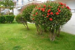 arbre rouge.JPG