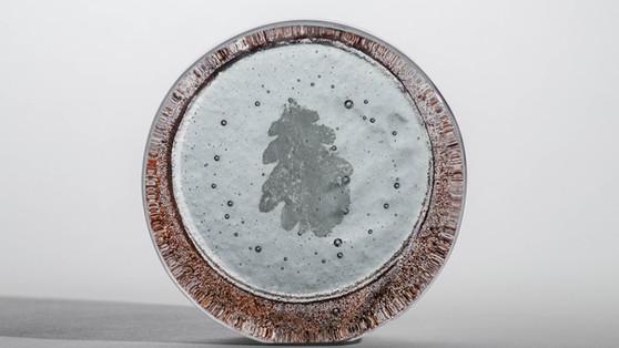 Fossil Vitrea Window