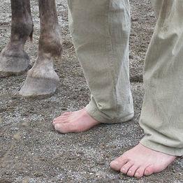 peus, potes, doma natural de cavalls