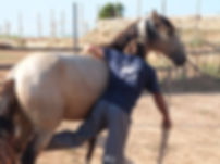 cavalls, doma natral, doma índia,