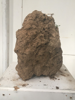 Soil taken from agricultural field