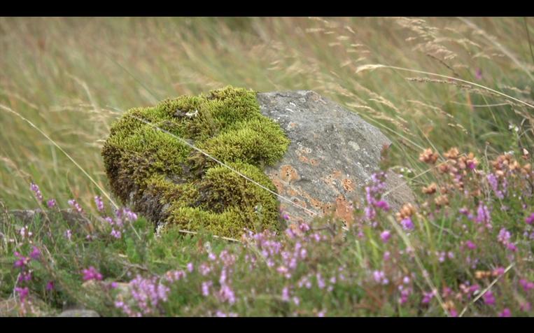 A rock on the island of Scarba, Scotland