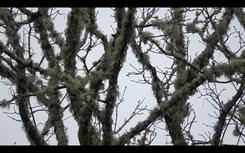 Moss on trees, Croab Haven, Scotland