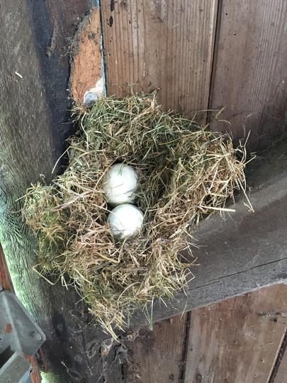 Nest (eggs)