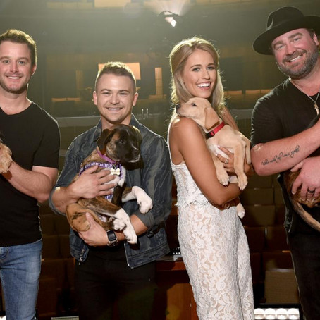 Hallmark Channel & PEDIGREE Foundation Televised Benefit Concert to Air Tonight Monday, Oct. 21st